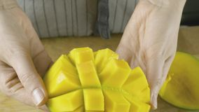 Young woman hands unfolds cutted yellow mango in slow motion close up video in 4K. Close up slo motion video of young woman hands unfolds cutted yellow mango stock photography