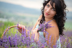 Young woman harvesting lavender flowers Royalty Free Stock Image