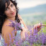 Young woman harvesting lavender flowers Royalty Free Stock Images