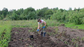 Young woman harvesting potato stock footage