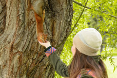 Young woman in a hat feeding a squirrel with hand nuts stock photography