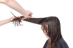 Young woman having a hair cut Royalty Free Stock Photo