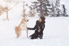 Young woman and her dog akita play in park on snowy day. royalty free stock image
