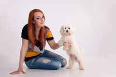 Young woman with her dog. Young redhead woman with her white Maltese dog in studio Royalty Free Stock Image