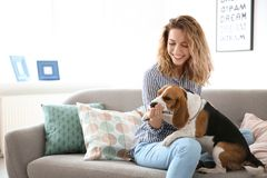 Young woman with her dog on sofa. At home Stock Photos