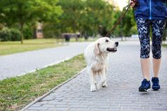 Young woman with her dog together in park. Pet care. Young woman with cute dog together in park. Pet care Royalty Free Stock Image