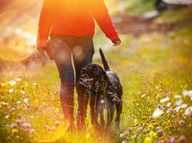 Young woman with her dog walking. Royalty Free Stock Image
