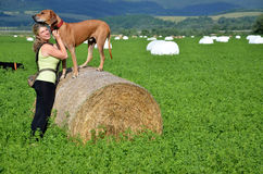 Young woman with her dogs on green meadow, the brown dog stands on roll of hay Stock Photos