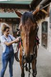 Young woman with her horse. Young woman taking care of her beautiful horse stock images