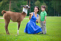 Young woman and her little son feeding baby lama Royalty Free Stock Images