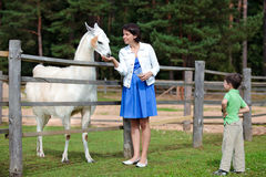 Young woman and her little son feeding white lama Royalty Free Stock Images