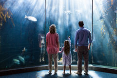 Young woman with her parents pointing a fish in the tank Stock Photography