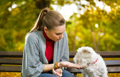 Young woman with her puppy. In autumn park Royalty Free Stock Images
