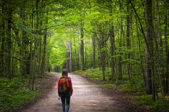Hiker on forest trail. Young woman hiker with backpack walking on hiking trail in green summer forest. Hilton Falls conservation area, Ontario, Canada Royalty Free Stock Photography