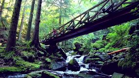 Young woman hiking in the forest stock footage