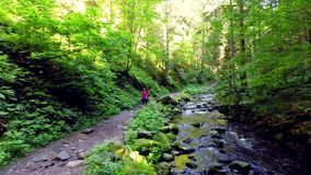 Young woman hiking in the forest stock video footage