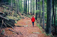 Woman hiking in the forest royalty free stock photo
