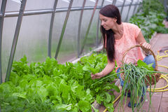 Young woman holding a basket of greenery and onion Royalty Free Stock Images