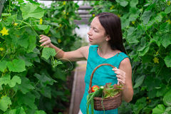 Young woman holding a basket of greenery and onion Royalty Free Stock Photo