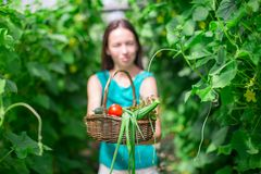 Young woman holding a basket of greenery and onion Stock Photos