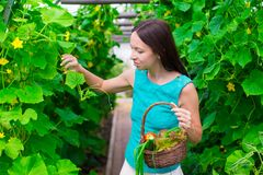 Young woman holding a basket of greenery and Stock Photos