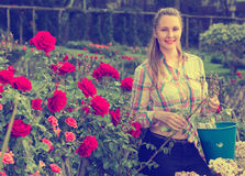 Young woman holding a basket and standing in the park of roses Stock Image