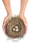 Young woman holding blackbird nest Royalty Free Stock Images