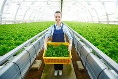Farmer with lettuce Royalty Free Stock Photos