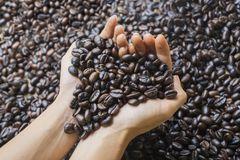 Young woman holding fresh coffee beans Stock Photography