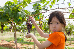 Young woman holding grapes Stock Photo