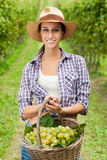 Young woman holding grapes Stock Images