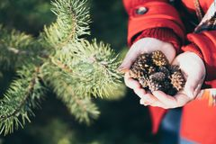 Young woman holding handful of Christmas tree pinecones