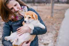 Young woman holding her Corgi puppy outdoors stock photography