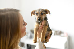 Young woman holding her puppy dog Royalty Free Stock Photography