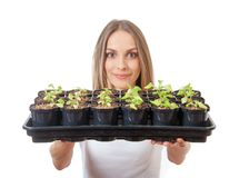 Young woman holding a lettuce seedling Royalty Free Stock Photo