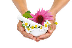Young Woman Holding Mortar With Herbs - Echinacea Stock Photo