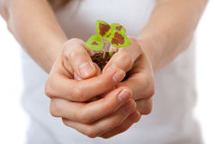 Young woman holding plant, coleus sprout stock photos