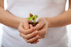 Young woman holding plant,  coleus sprout Royalty Free Stock Image