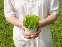 Young woman holding potted plant. Close-up of a young woman holding potted plant Royalty Free Stock Photography