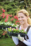 Young woman holding seedlings Royalty Free Stock Photos