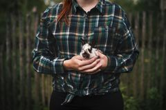 Young woman holding a small, cute bunny. Farmer holding rabbit. Concept of farm and animals. Young woman holding a small, cute bunny. Farmer holding rabbit stock photo