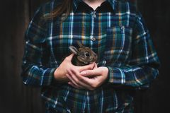 Young woman holding a small, cute bunny. Farmer holding rabbit. Concept of farm and animals. Young woman holding a small, cute bunny. Farmer holding rabbit royalty free stock images