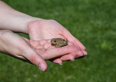 Young woman holding a small toad Stock Images