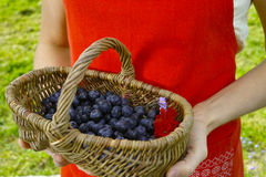 Young woman holding wicker basket witn fresh blueberry Royalty Free Stock Images