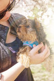 Young woman holding a Yorkshire terrier puppy Royalty Free Stock Images