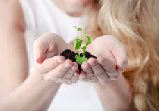 Young woman holding young plant in her hands Stock Photo