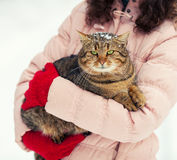 Young woman holds a cat Royalty Free Stock Image