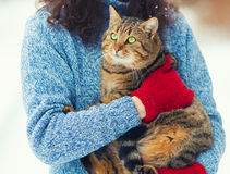 Young woman holds a cat Stock Images