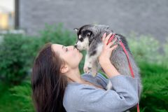 Young women holds her best friend little pet puppy of husky in her arms. love for dogs royalty free stock images