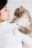 Young woman holds her fluffy cat in hands Stock Images